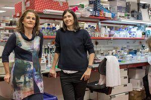 Dos científicas españolas consiguen curar la fibrosis pulmonar en ratones